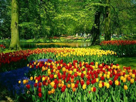 Bing Spring Wallpapers Top Free Bing Spring Backgrounds Wallpaperaccess