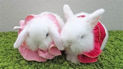 Bunny Bunnies Wallpapers Rabbit Animals Rabbits Kiss