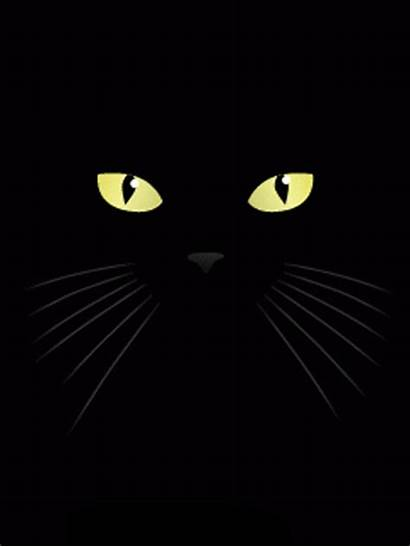 Cat Lick Gifs Licking Cool Screen Animated