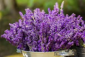Lavendel Vermehren Wasserglas : lavendel vermehren und berwintern so gelingt 39 s ~ Lizthompson.info Haus und Dekorationen