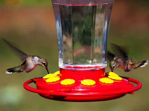choose   hummingbird feeder reviews tips