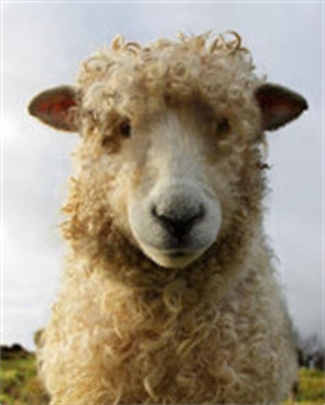 semi nude perv sgs sheep  death daily star