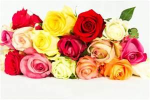 Rosen Aus Papier : rosen falten bastelanleitung ~ Frokenaadalensverden.com Haus und Dekorationen