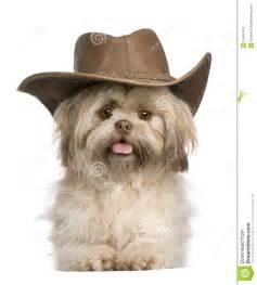 Shih Tzu Wearing Hats