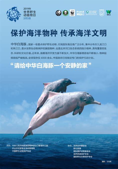 关注世界野生动植物日 携手保护海洋物种_ 海洋网