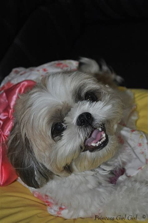 cute female dog names  meanings pethelpful