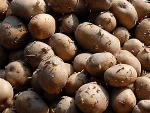 Tuber vegetables - World Crops Database