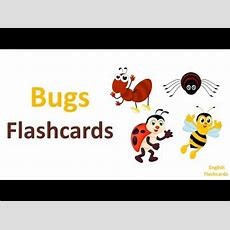 Bugs Flashcards  Learn Insects & Bugs Vocabulary  Educational Video Youtube