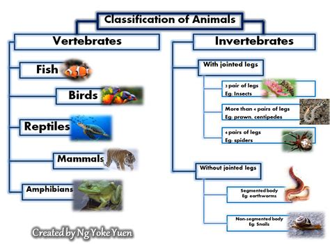 Animal's: Classification of Animals