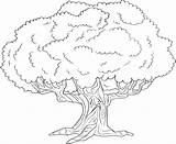 Tree Elm Coloring Pages Getcolorings Trees Printable sketch template