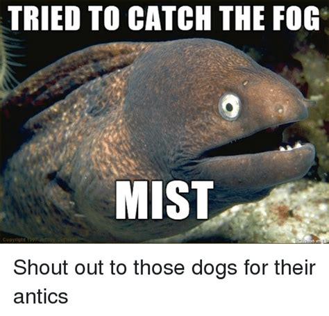 catch  fog mist shout    dogs