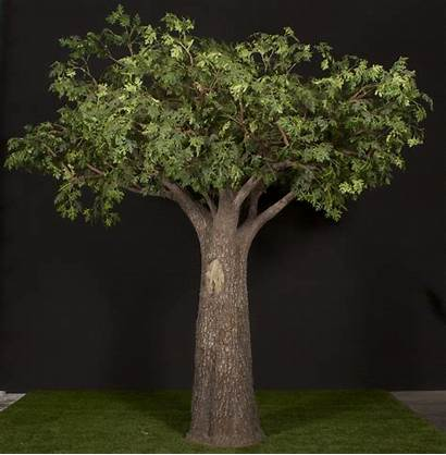 Fabricated Tree Trees Palm Custom Oak Custompalmtrees