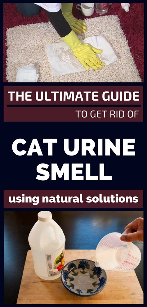 The Ultimate Guide To Get Rid Of Cat Urine Smell Using