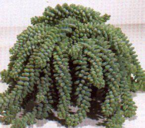 Sukkulenten Arten Bilder : sukkulenten winterhart sukkulenten eine auswahl ~ Lizthompson.info Haus und Dekorationen
