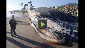 Video of World's Biggest Animal Discovered: The Biggest ...