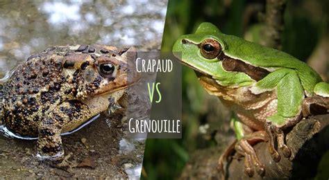 différence entre la grenouille et le crapaud animaniacs