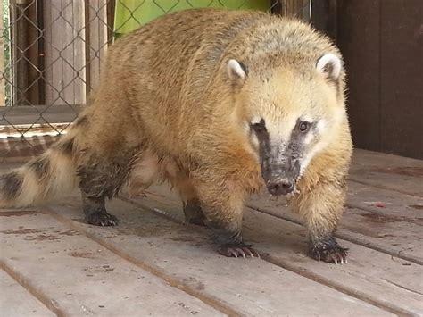 animals tails zoo exotic petting happy tiny