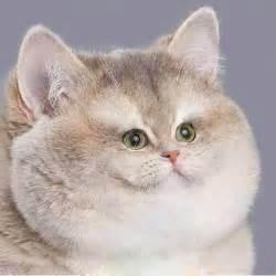 tiny cats cat with tiny vi by witsawat33 on deviantart