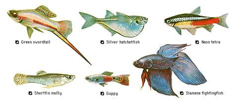 aquaticszone list  freshwater tropical community fish