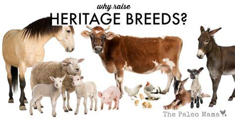 raise breeds heritage why livestock shares