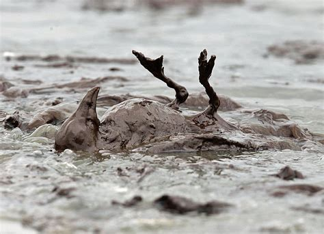 photo timeline   deepwater horizon oil spill crisis