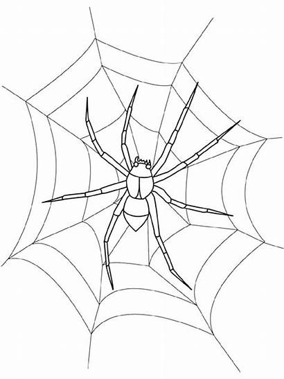 Spider Web Coloring Simple Pages Drawing Printable