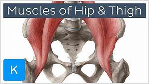 Anatomy Of The Hip Joint Muscles
