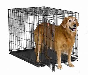 midwest icrate 1542 single door folding dog crate 42quotl x With where can i buy a dog crate