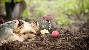 Tiere Im Garten Begraben : haustiere bestatten das ist erlaubt ~ Lizthompson.info Haus und Dekorationen