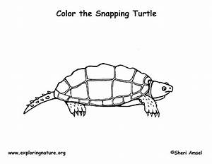 drawn turtle snapping turtle pencil and in color drawn With tortoise control lko