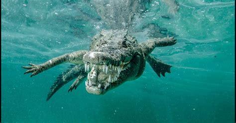 snapper meets snapper  underwater photographer