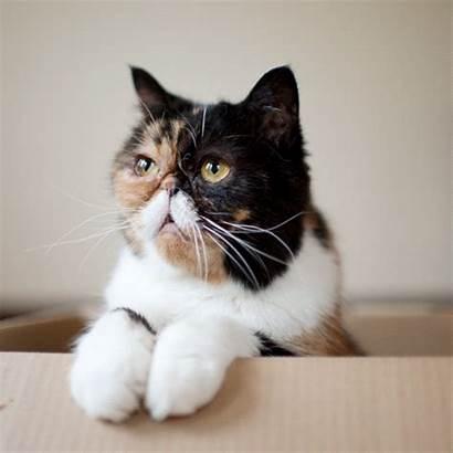 Pudge Cat Gifs Chats Bla Mustache Faim