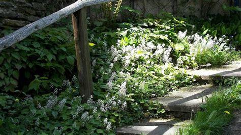 schnell rankende pflanzen rankende pflanzen winterhart pflegeleichte pflanzen winterhart dipladenia mandevilla rankende