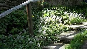 Schnell Rankende Pflanzen : kletterpflanzen als sichtschutz winterhart kn terich kletterpflanzen bei baldur garten ~ Frokenaadalensverden.com Haus und Dekorationen