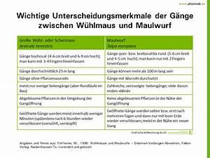 Wühlmaus Oder Maulwurf : phytotab tabellen der kategorie 39 wirbeltiere 39 ~ Orissabook.com Haus und Dekorationen