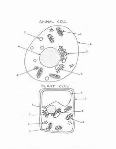 15 Best Plant And Animal Cell Art Images On Pinterest