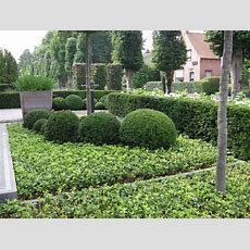 Yew Topiary Hedging Plants  Various Shapes & Sizes