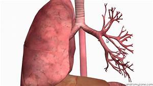Respiratory System Introduction