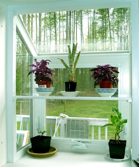 House Plants For Window by Plants Inside Rooms