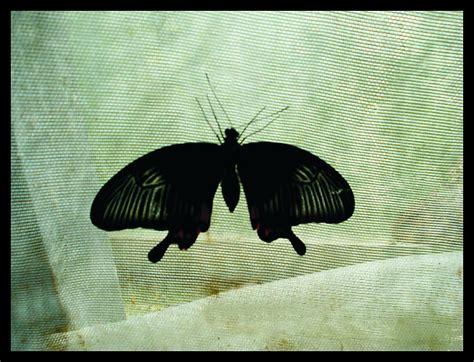 10 interesanti fakti par tauriņiem - Spoki