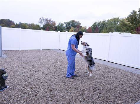 falls animal hospital 17 best images about building a vet practice exterior on