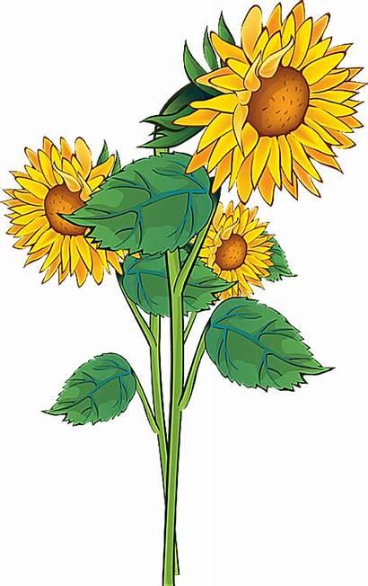 Clip Summer Flower Sunflower Clipart Flowers Plant