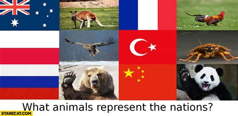 animals represent nations france rooster turkey