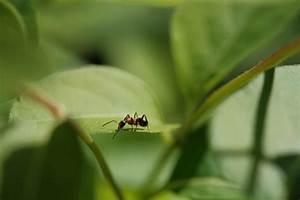 Ameisen Im Gewächshaus : ameisen im gew chshaus so werden sie sie los ~ Lizthompson.info Haus und Dekorationen