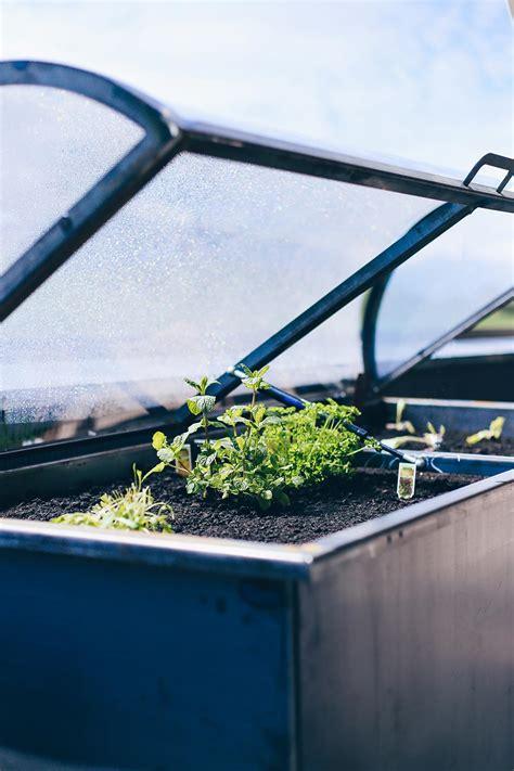 hochbeet tipps anlegen bepflanzen und leckeres gemuese