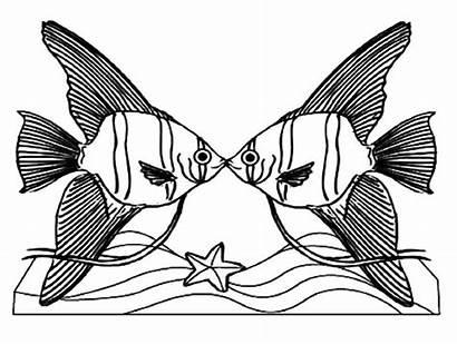 Coloring Fish Drawing Angelfish Kissing Colour Quasimodo