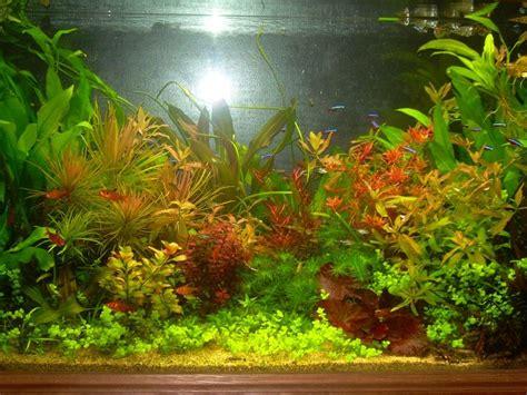 comment se debarrasser des escargots dans un aquarium 28 images k les escargots dans l