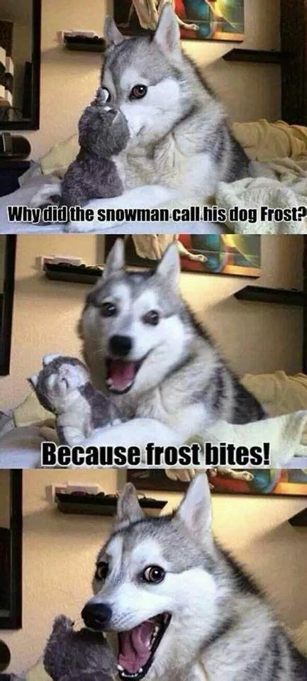Pun Husky Meme - 17 best images about bad dog pun on pinterest jokes bad pun dog and bad puns