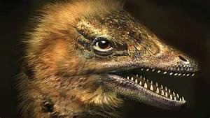 Scientists Grow First Ever Chicken Embryos With Dinosaur Legs