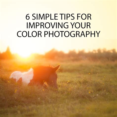 6 Simple Tips For Improving Your Color Photography  Discover Digital Photography